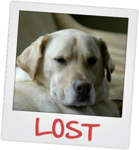 lost or missing pets