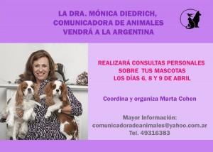 Consultas en Argentina 2016